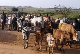 Over 10 herders from Isiolo and Marsabit feared dead in gun battle