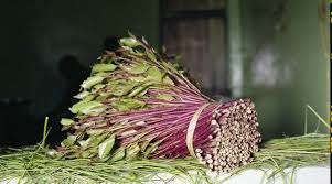 KEBS approves New Code To Guide production and distribution Of Miraa